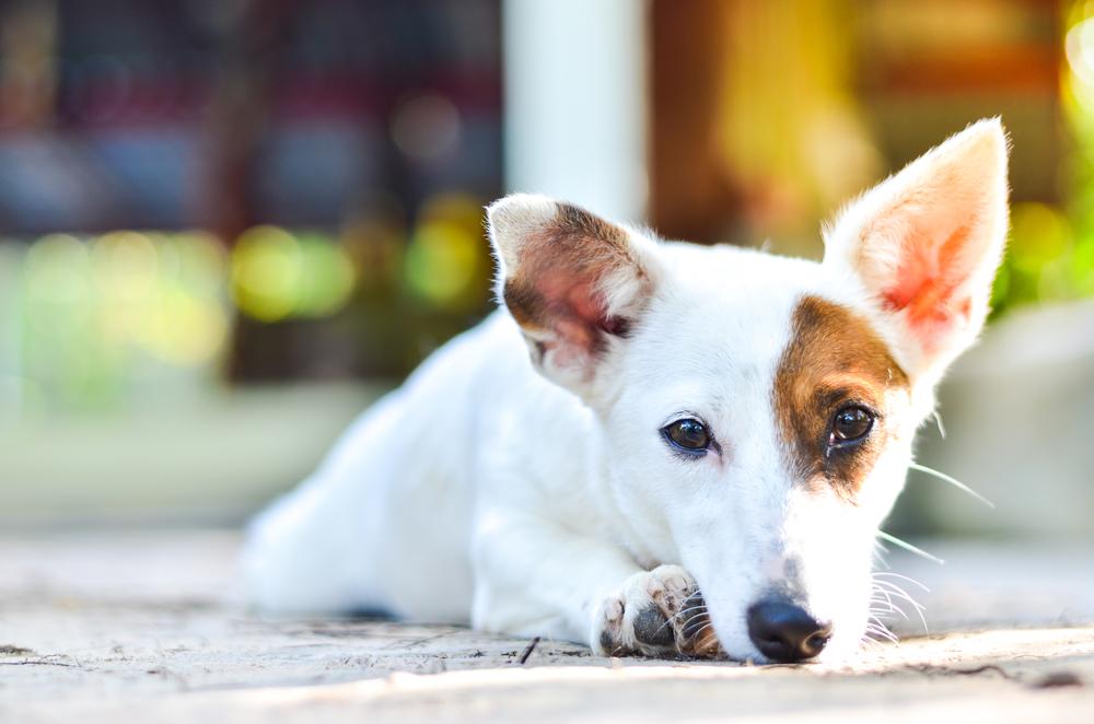 garde-chien-domicile